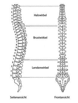 Остеохондроз может возникнуть на любом участке позвоночника