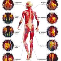 Боль в мышцах по всему телу: причины мышечной боли, что делать, как снять сильную боль в мышцах