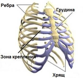 Грудино-реберный сустав второго ребра протезирование суставов у с