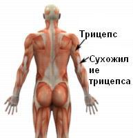 Жим лёжа болит локоть сухожилия лечение артроза коленного сустава в иркутске